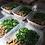 Thumbnail: Tiras de Carne com Molho de Laranja e Gengibre + Couve refogada