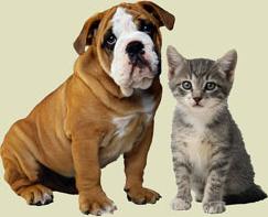 Curtis Road Animal Hospital champaign veterinarian savoy veterinarian