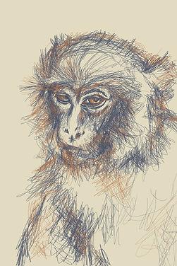 monkeylowres.jpg