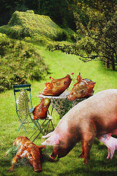 Pig Country