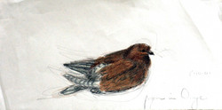 Pigeon in Orange, France(2001)
