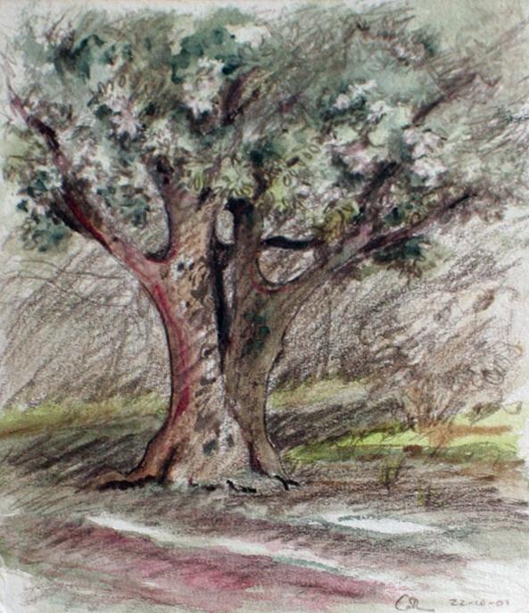 Tree in Orange, France (2001)
