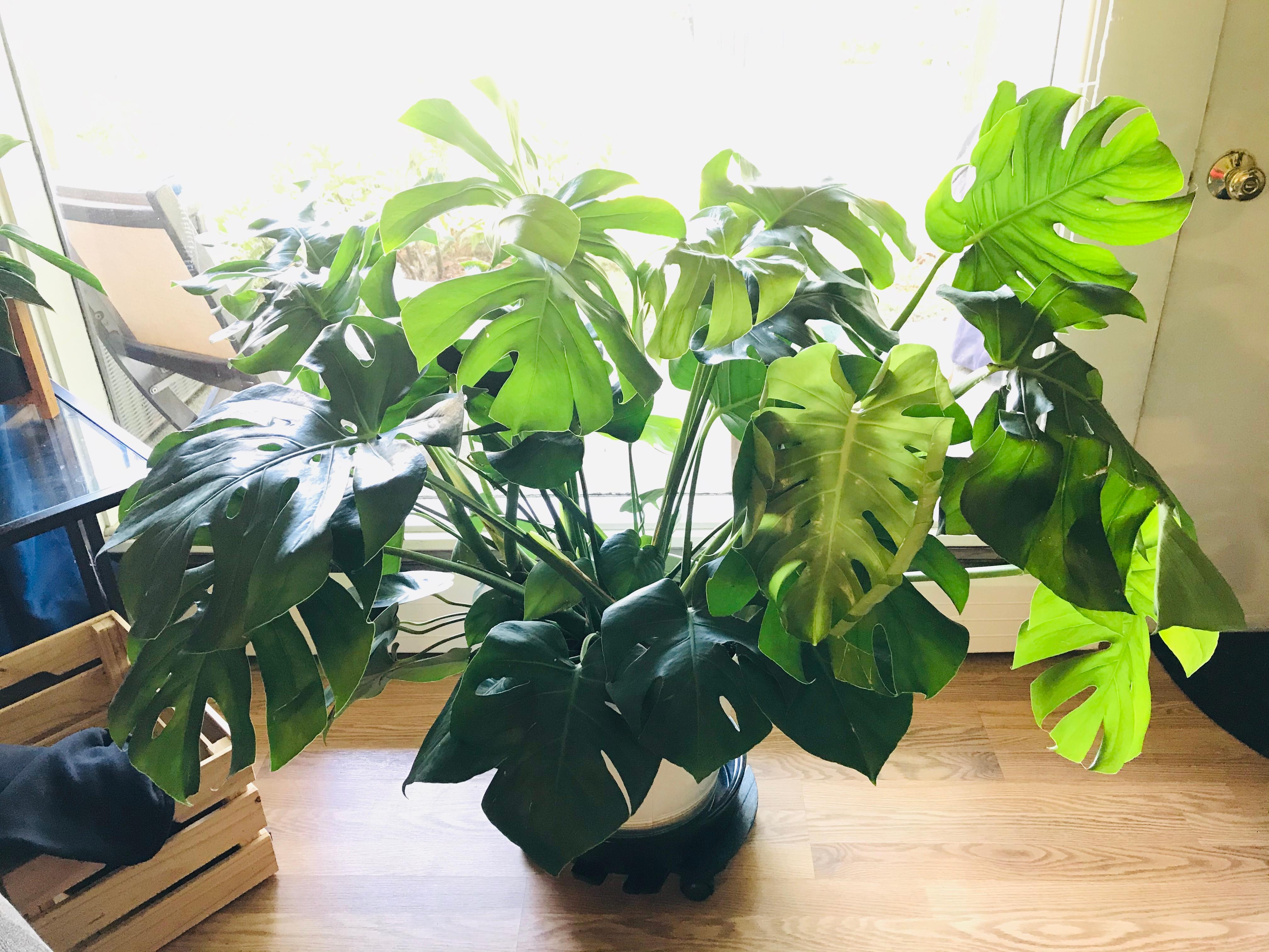 Plant Consultation