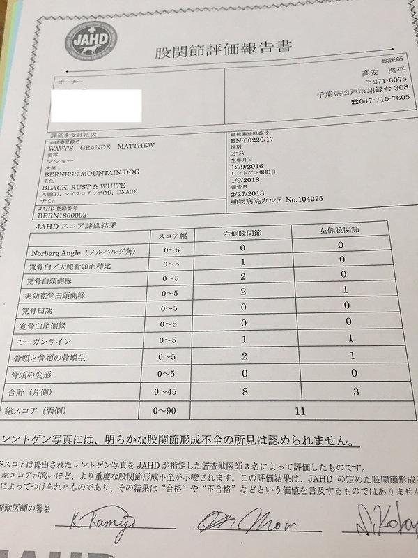 マシューJAHD股関節.jpeg