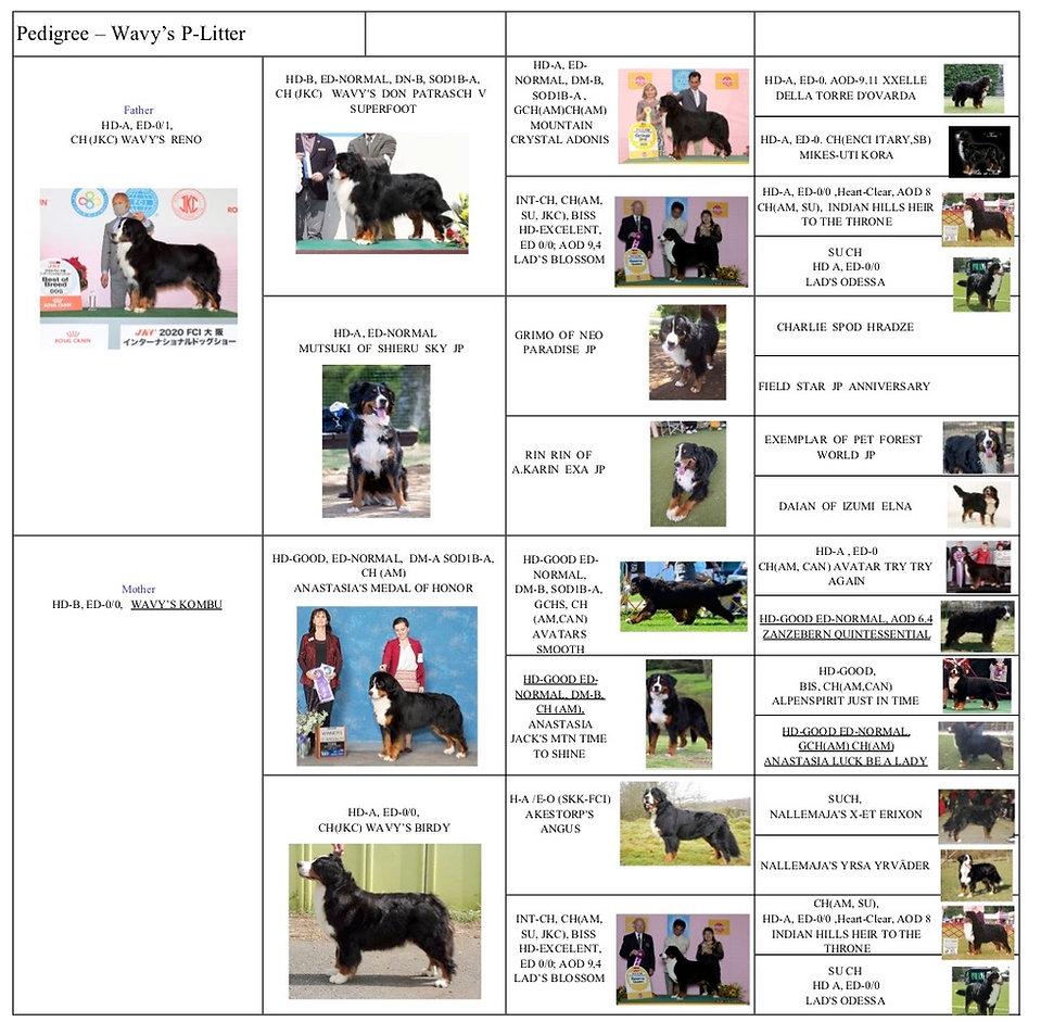 Kombu and Reno pedigree picture.jpg