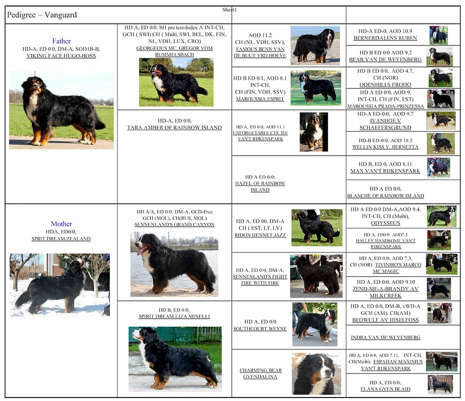 Vanguard pedigree picture.jpg