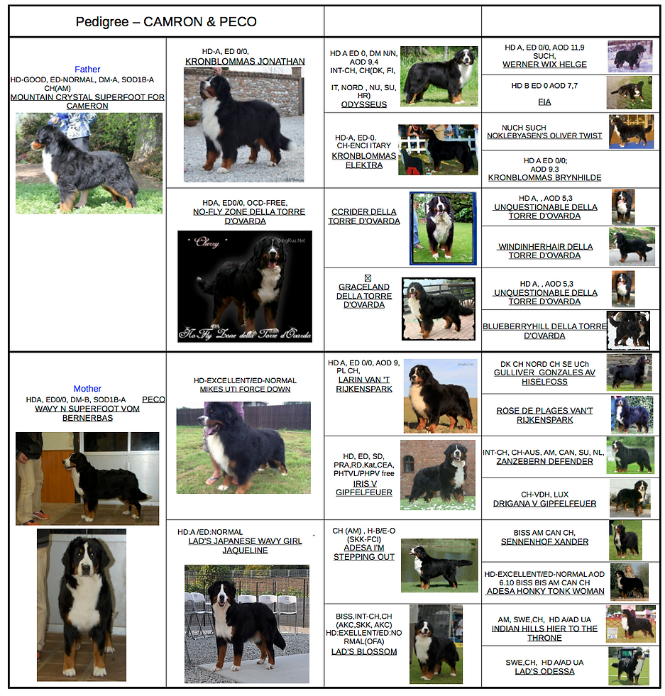 Peco and Cameron pedigree picture.png