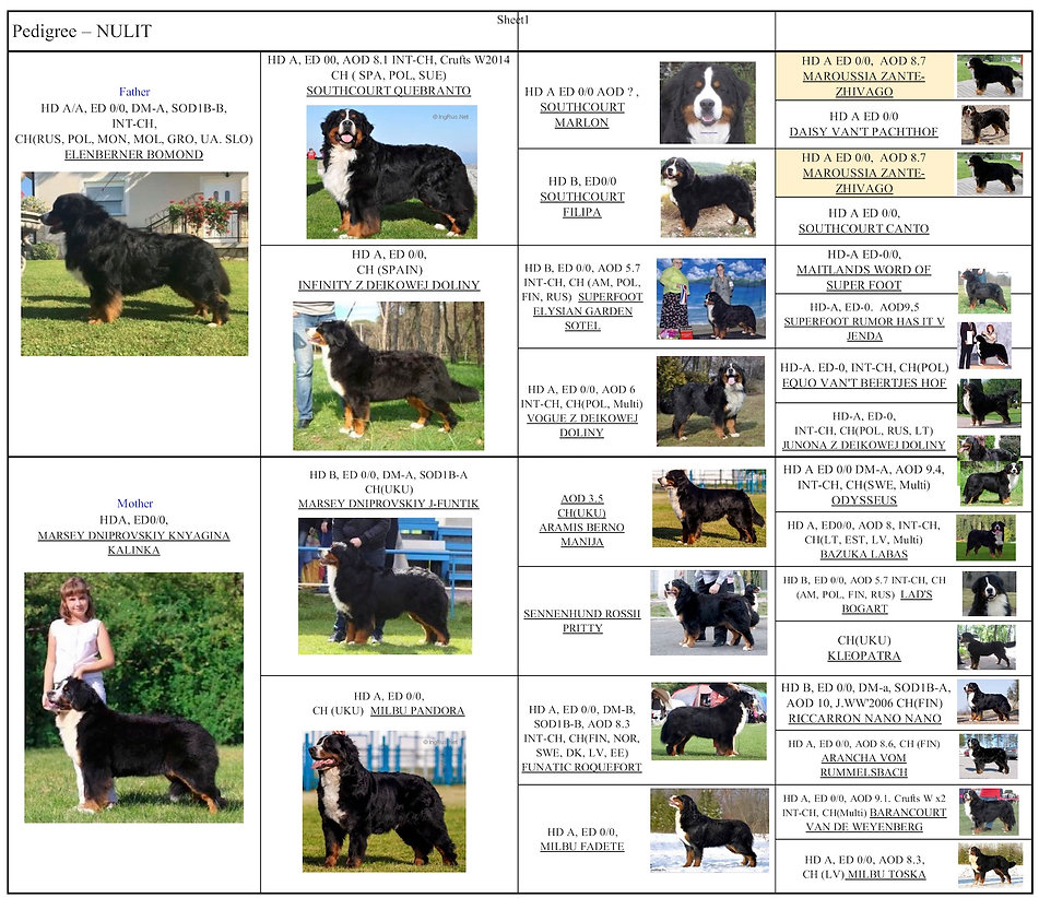 Nulit pedigree picture.jpg