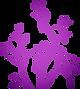 Semirosas logo
