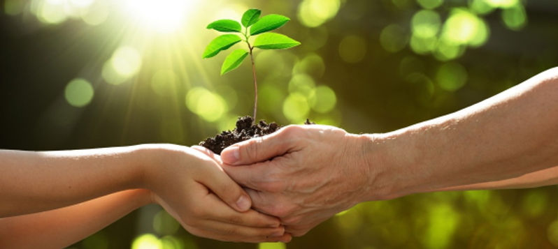 two hands holding plant 2.jpg