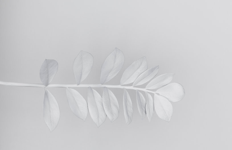 White%20Branch_edited.jpg