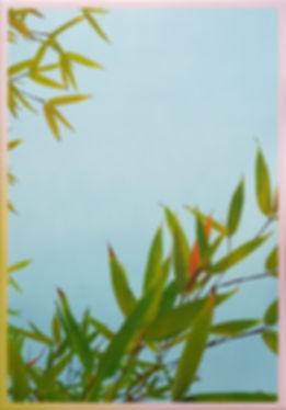 Bamboo (Real).jpg