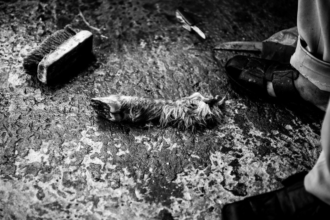 A severed leg of a slaughtered ram during the Feast of Sacrifice.