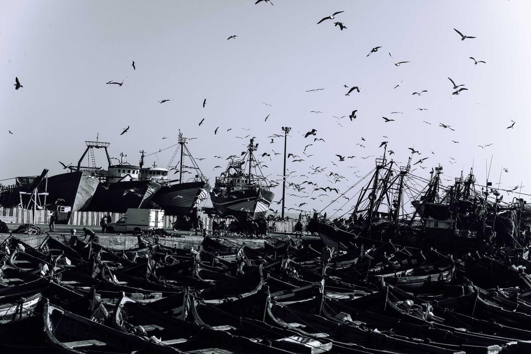 Seagulls over the port of Essaouira