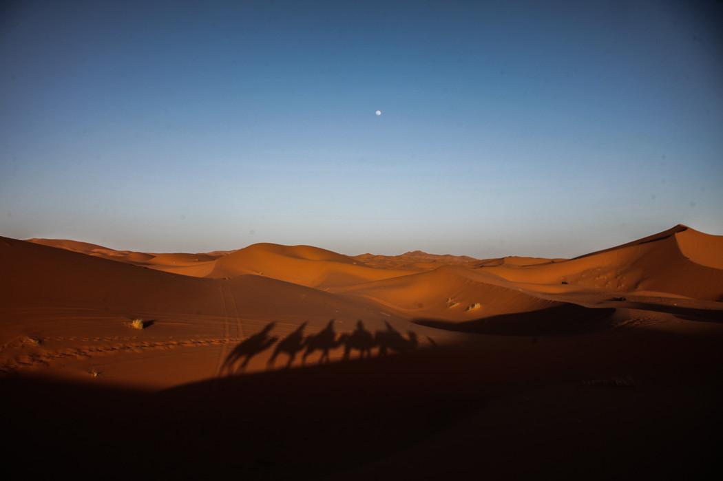 Shadows of camels in the Sahara desert near Mezouga.