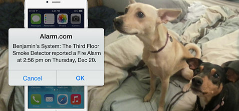 a cell phone notifcation from alarm.com and an image in the background of two dogs