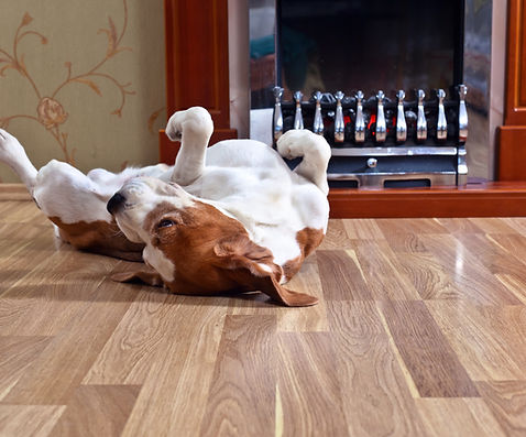 a dog laying on its back in front of a fireplace