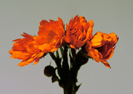 OrangeFlower&Roses2850 1 copy.jpg