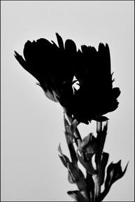 OrangeFlower&Roses2809 22edited.jpg