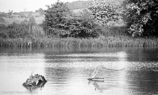 Attenborough Nature Reserve, 1986