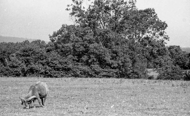 Rowney Green, 1983