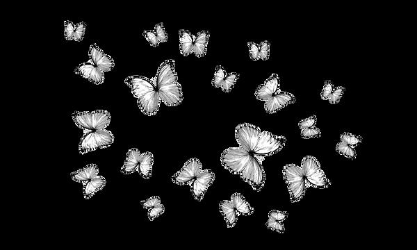 butterflies 1.png