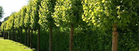 elagage-arbres.jpg
