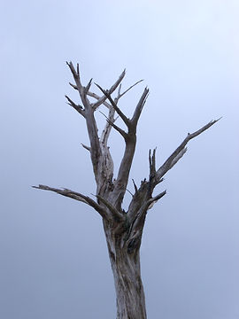 deadtree1101.jpg