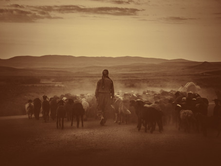 Learning to be a Good Shepherd