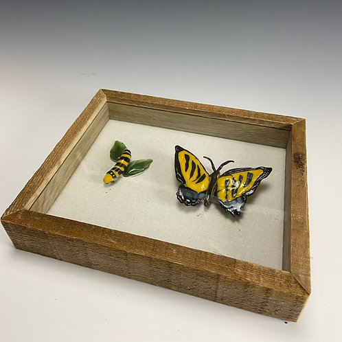 Caterpillar and Butterfly Shadow Box