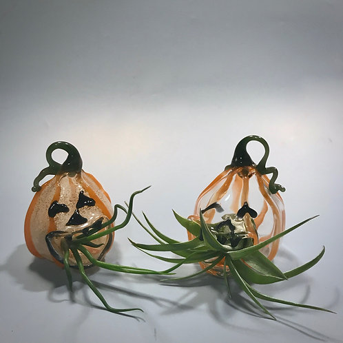 Glass Jack-o-Lantern Terrariums
