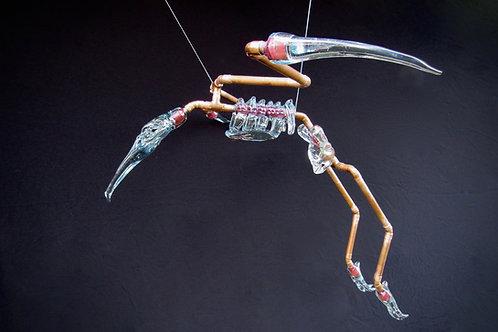 Ibis Bird Skeleton