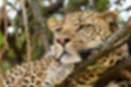 Wildlife, Masai 2015