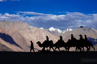 Nubra Valley, Ladakh