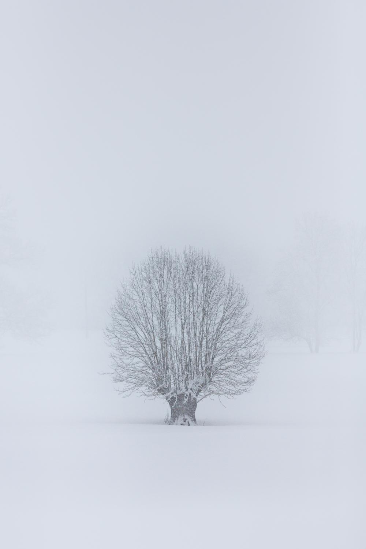 L'hiver en Vallée d'Aure