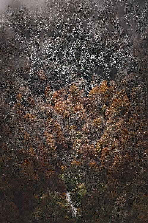 Automne - Hiver Pyrénéen                         31 Oct et 1er Nov