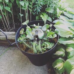 A Pot, A Pump, A Pond