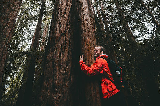syncastar_treehugging.jpg