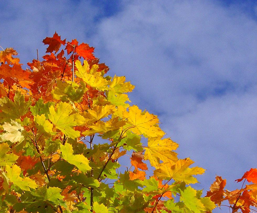 autumn-1464830.jpg