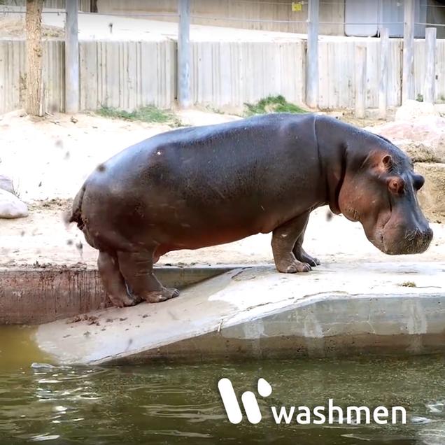 WASHMEN HIPPO.png