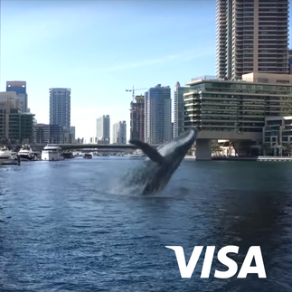 VISA WHALE.png