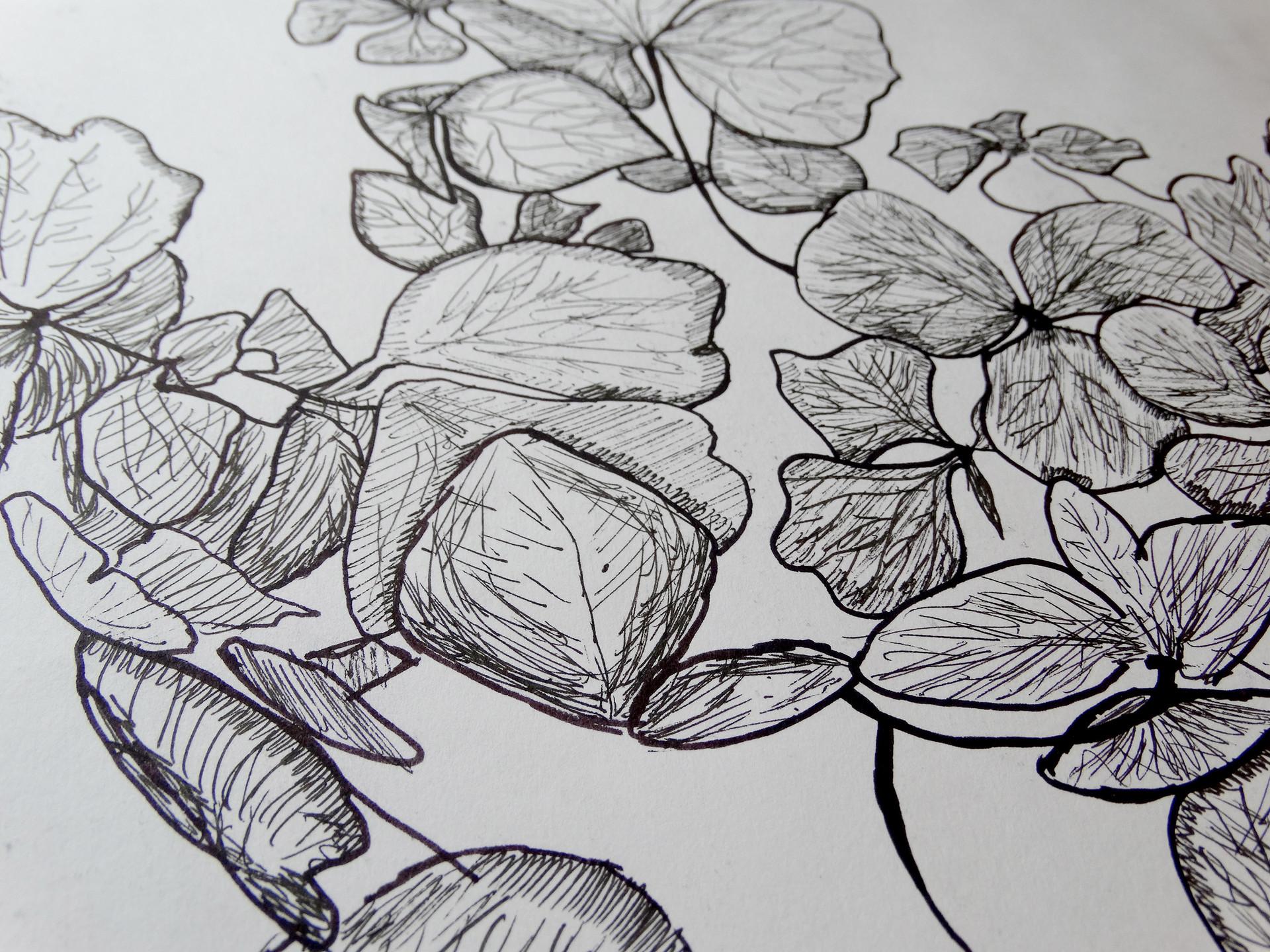 hand-drawn illustration of a hydrangea