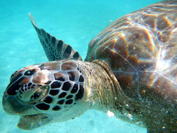 Turtle 2015