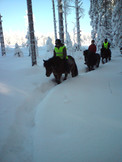 icelandic horse winter trek