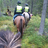 icelandic horse at forest