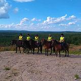icelandic horses finland