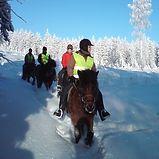 icelandic horse winter