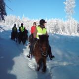 icelandic horse in single line at finnish winter
