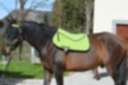 vente tapis chevaux