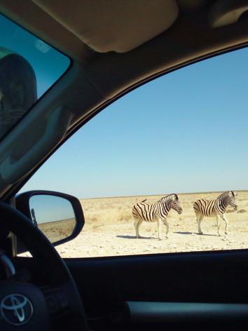 Wilde Tierwelt Namibia